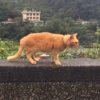 台湾の猫村に行ってみた